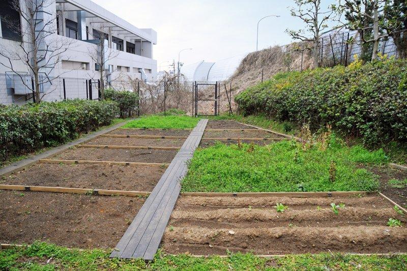 レンタルできる菜園