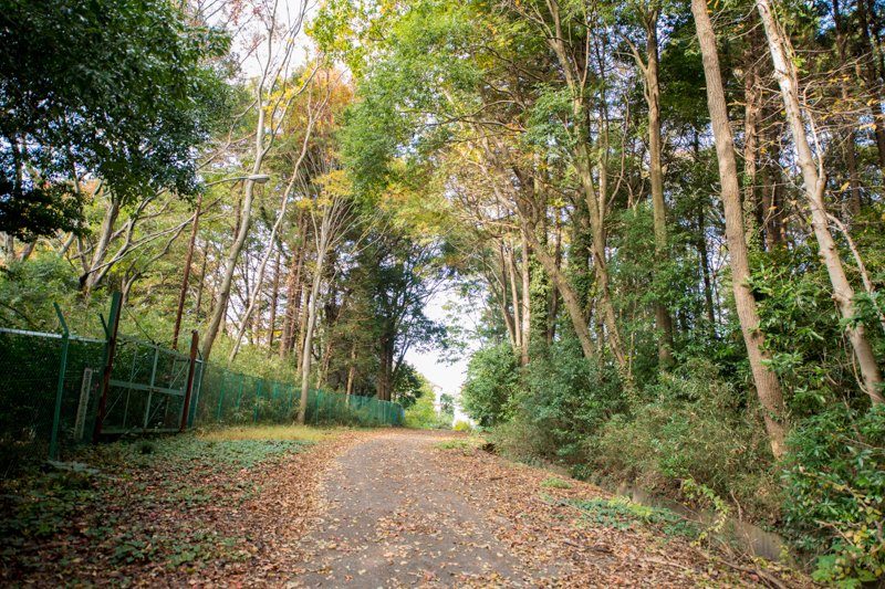 自然観察ができる「市野谷の森」