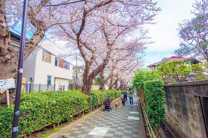 いちかわ文学の散歩道